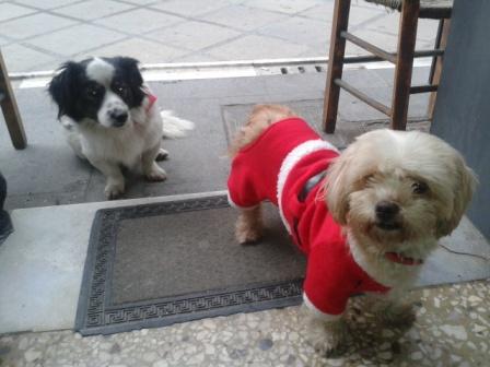 Να ρθει όπως τα δυο σκυλάκια, ανέμελο το 2014 -φωτογραφία σήμερα 31.12.2013,στο λαϊκό καφενείο του Ζαμπρονικολιό, στο Καμαράκι