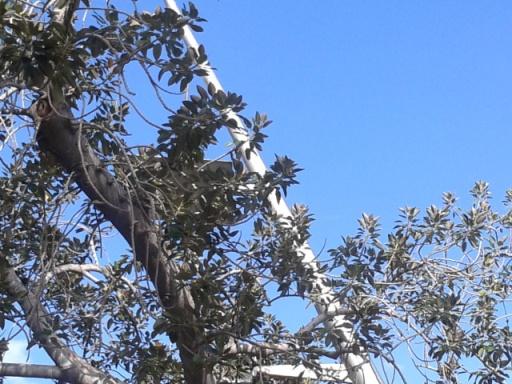 Τα σίδερα τότε ήταν πιο ενοχλητικά, όμως τα κομμένα δέντρα αμύνθηκαν, εξαφάνισαν τις τεράστιες και απίθανες κεραίες