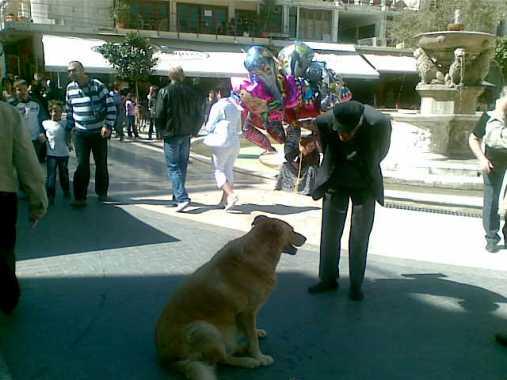 Συνομιλία με ένα αδέσπωτο σκυλί του Κέντρου...